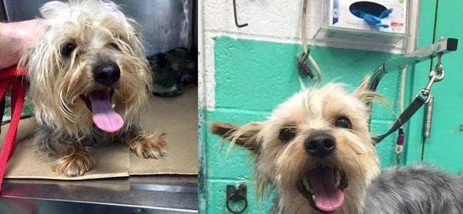 Il offre un toilettage des chiens de refuge pour leur for Trouver une maison