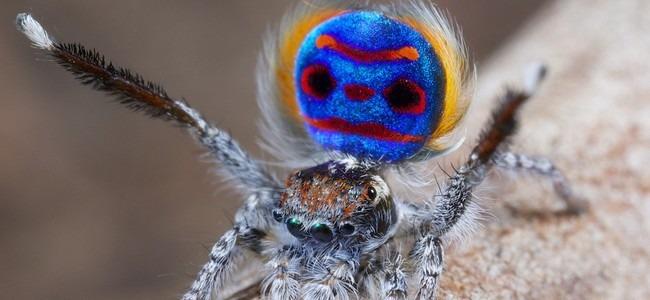 d couvrez comment attraper les araign es sans les toucher buzz le parisien etudiant. Black Bedroom Furniture Sets. Home Design Ideas