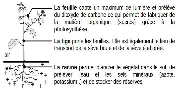Brevet 2019 Le Sujet De L Epreuve De Sciences Svt Et Physique