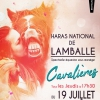affiche CAVALIERES - SPECTACLE EQUESTRE